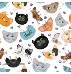 Cat face background with paws vector image