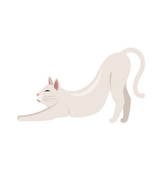 Burmilla shorthair cat flat vector