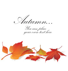 Fall leaf nature banner autumn leaves background vector