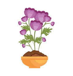 flowers in a pot icon vector image