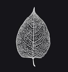 Skeletonized leaf of a tree on a black vector