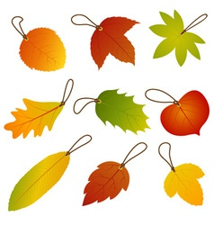 Autumn Leaves Hang Tags vector image