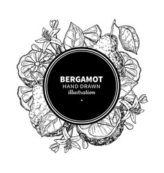 bergamot drawing frame isolated vintage vector image