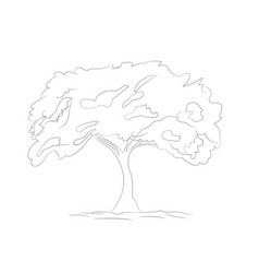 big tree drawing lines vector image