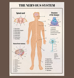 nervous system retro poster vector image