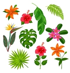 Set of stylized tropical plants leaves and vector