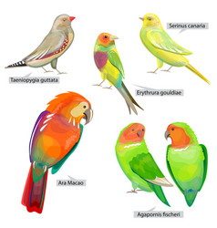 Set with different birds that can be used vector