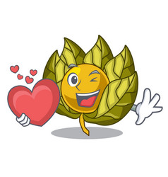 with heart physalis fruit isolated in the vector image