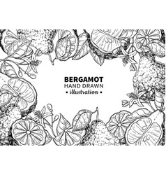 Bergamot drawing frame isolated vintage vector