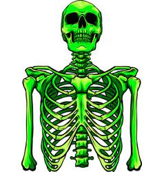 Green human skeleton on white background vector