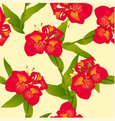 Red canna indica - canna lily indian shot on vector
