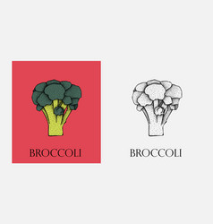 broccoli broccoli organic food vector image