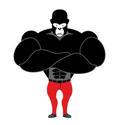 Gorilla bodybuilder Strong black monkey with big vector
