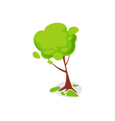 Green ash tree isolated icon vector