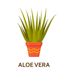 aloe vera decorative houseplant in pot florist vector image