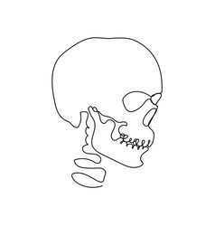Continuous human skull one line art vector