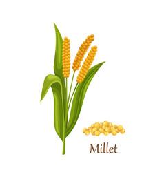 Millet grass cereal crops or grains vector