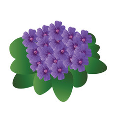 purple violet flowers with green leafs on white vector image