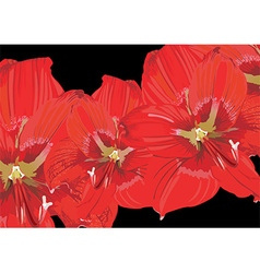 Red Lily Floral Background vector