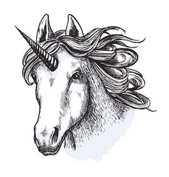 unicorn horse mystic magic animal sketch vector image vector image