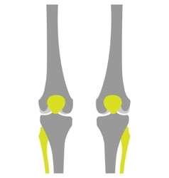 Flat Icon of Knee on White Background vector image