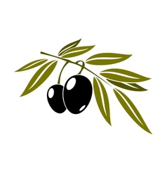 Black olives branch with leaf vector