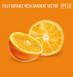 Half and round orange slice on an orange vector