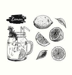 lemonade drawing elements vector image
