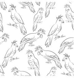 parrots contours seamless vector image