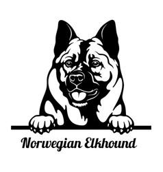 Peeking dog - norwegian elkhound breed - head vector