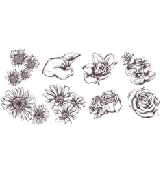 vintage flowers set line art sunflower roses and vector image