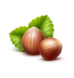 Full unpeeled hazelnuts with leaves on background vector