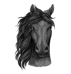 Black raven horse full face artistic portrait vector