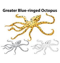 Doodle animal for greater blue-ringed octopus vector