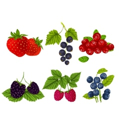 Fresh berries set vector image