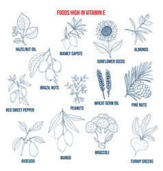 natural herbs as source vitamin e nuts vegetables vector image