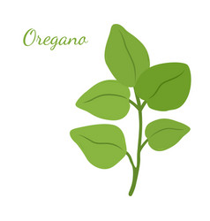 oregano leaves organic herb condiment vector image vector image