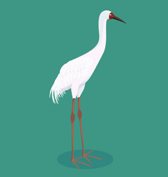 Siberian crane cartoon vector