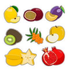 The theme fruits vector