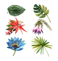 Tropical plants leaves watercolor sketch icons vector