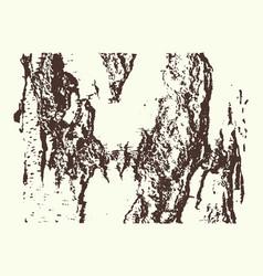 Contrast texture of birch bark vector