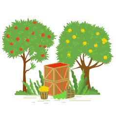 Garden with trees and apples in containers vector