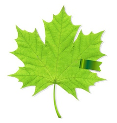 Green Leaf With Ribbon vector