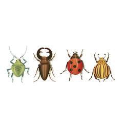 Realistic bugs and insects with shadows set vector
