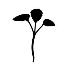 rosie pac choi organic microgreen vector image