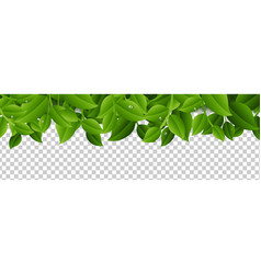 tree branches isolated white background vector image