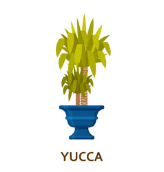 yucca decorative houseplant in pot florist vector image