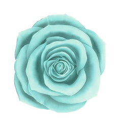 beautiful blue rose floral decorative vector image
