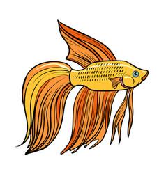 Isolated cockerel aquarium fish vector