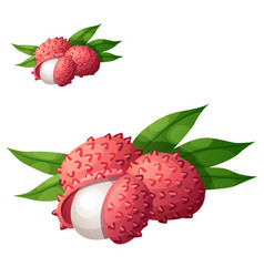 lychee fruit cartoon icon isolated on vector image